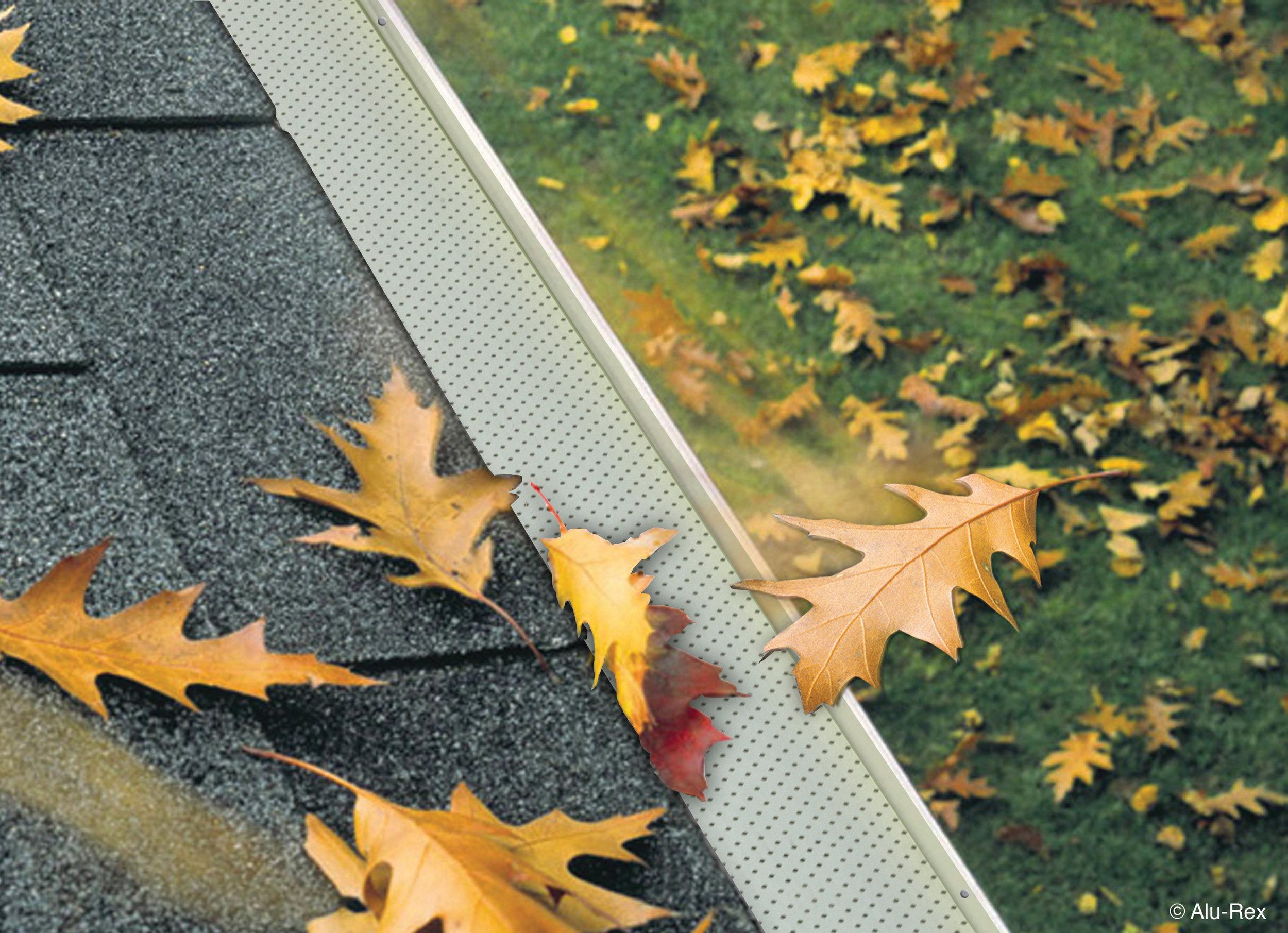 Leaves_feuilles.jpg