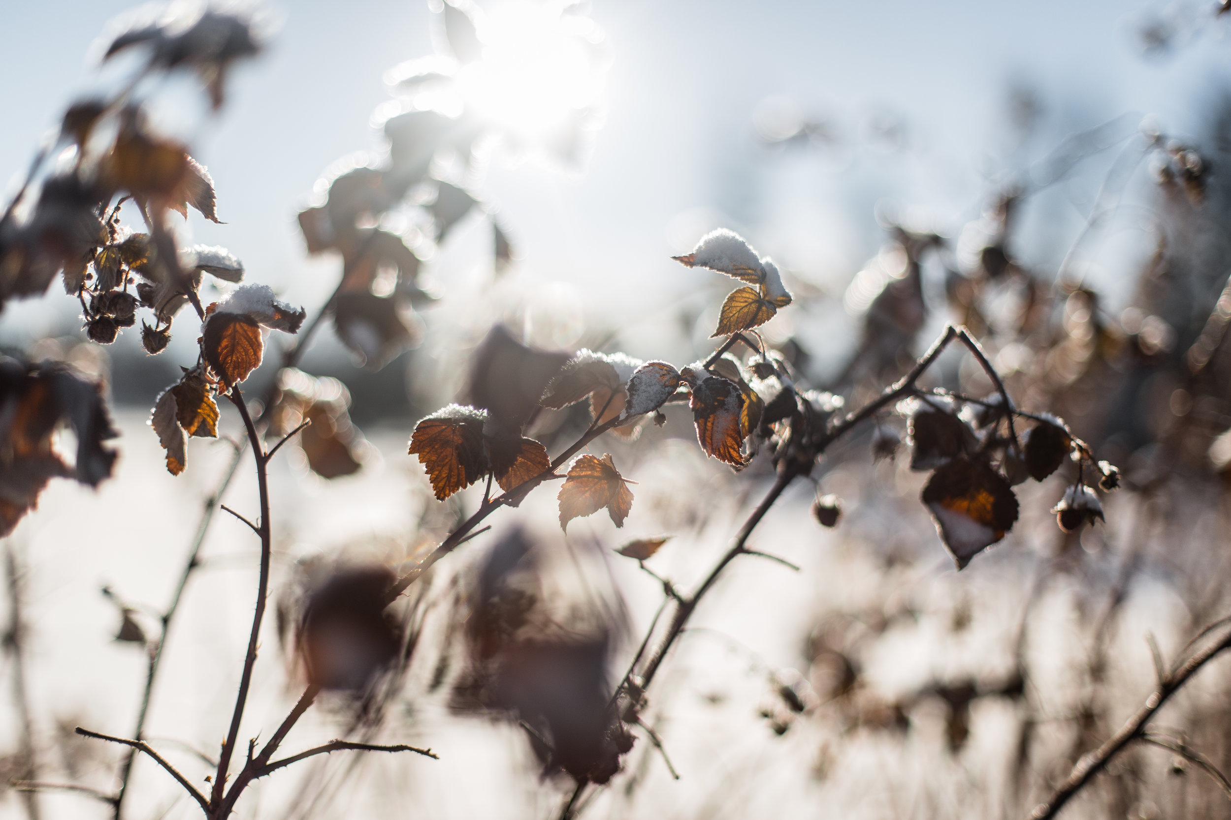 flowersandplants-3.jpg