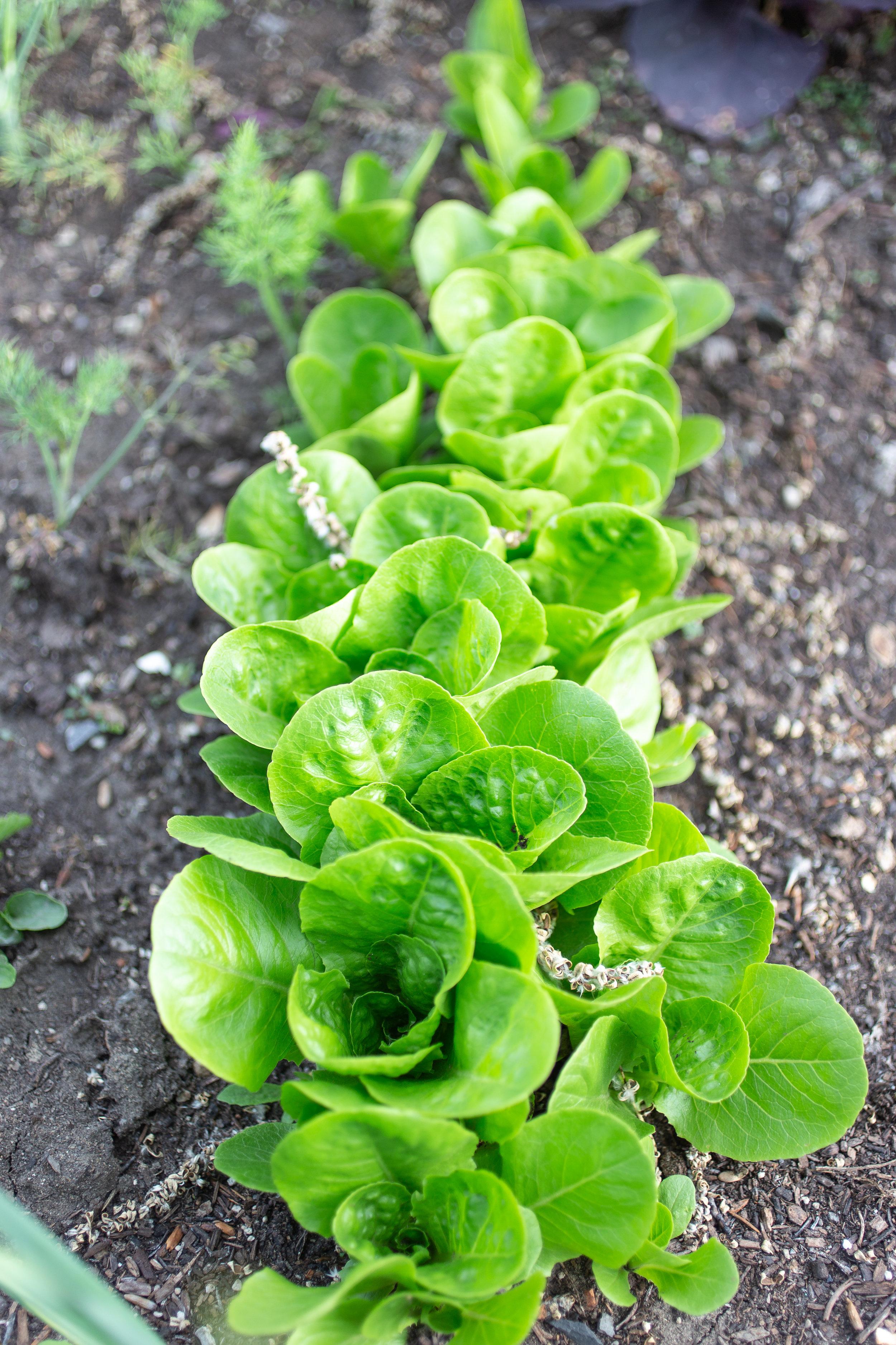 PlantsandFlowers-40.jpg