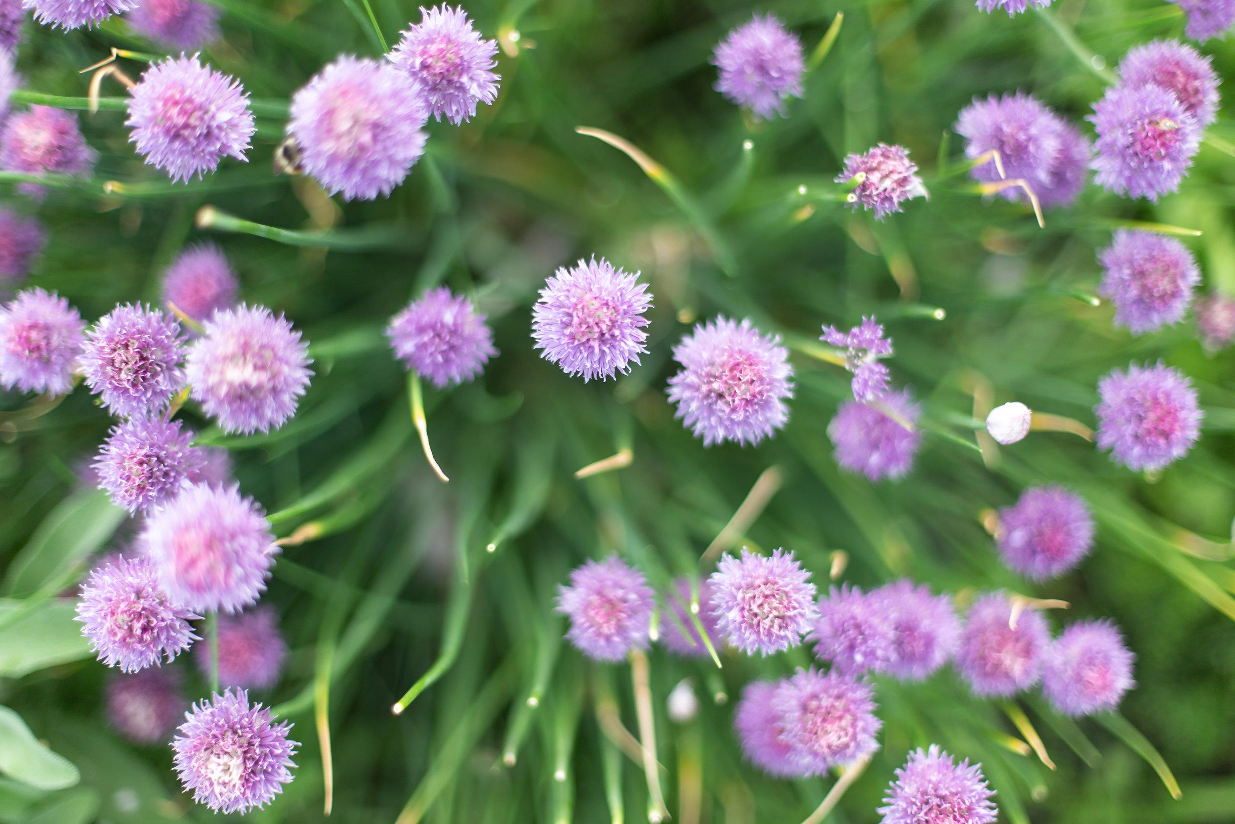 PlantsandFlowers-59.jpg