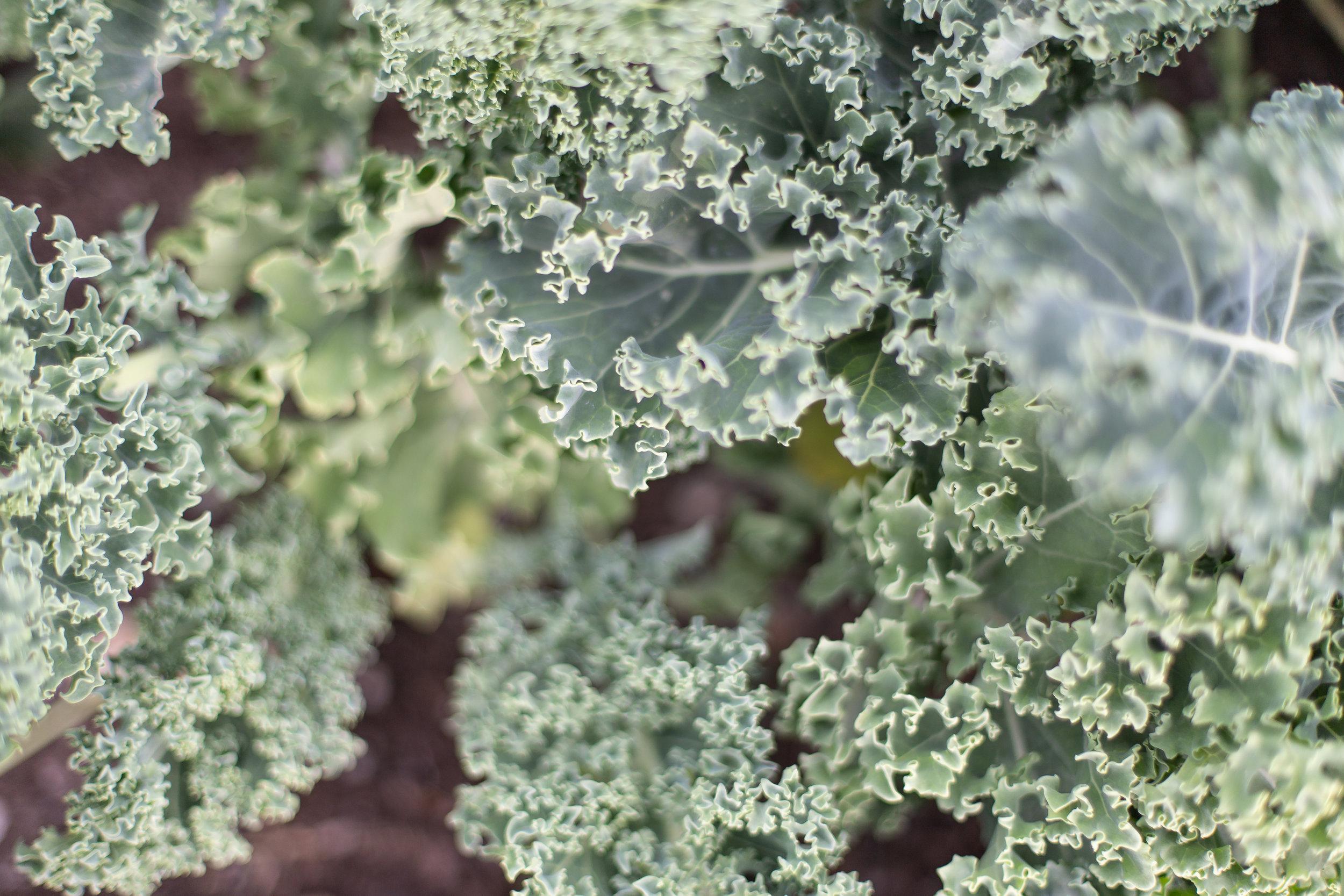 PlantsandFlowers-64.jpg