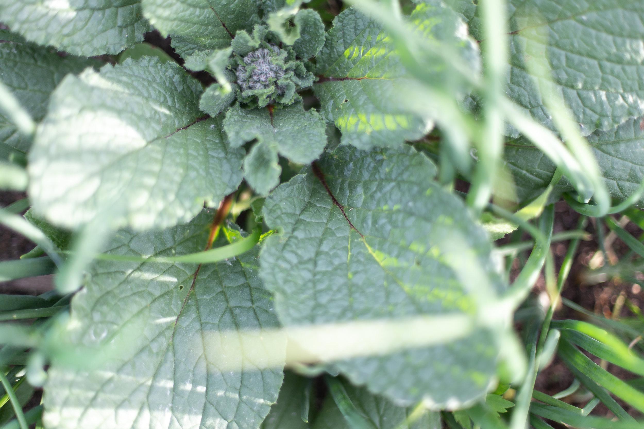 PlantsandFlowers-66.jpg