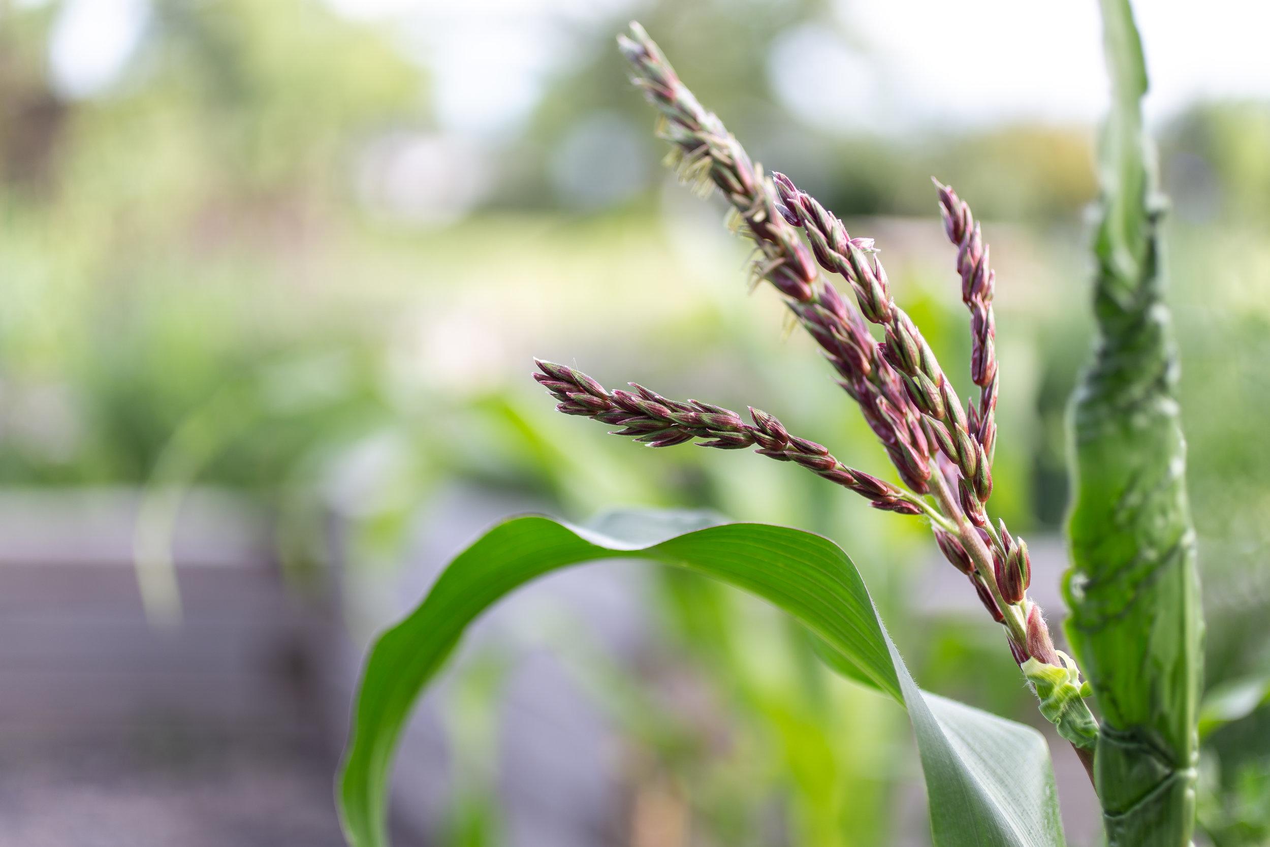 PlantsandFlowers-38.jpg