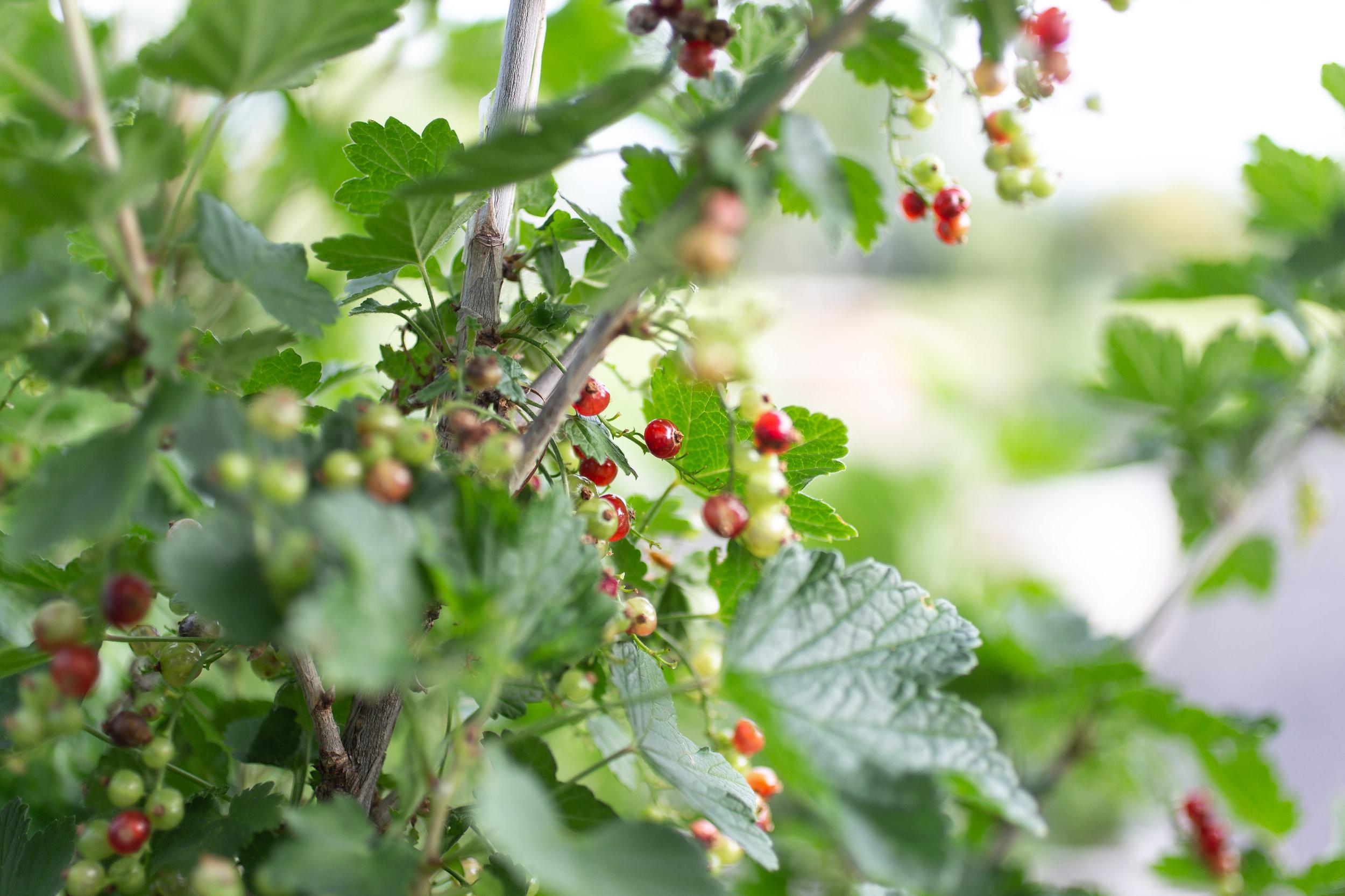 PlantsandFlowers-36.jpg
