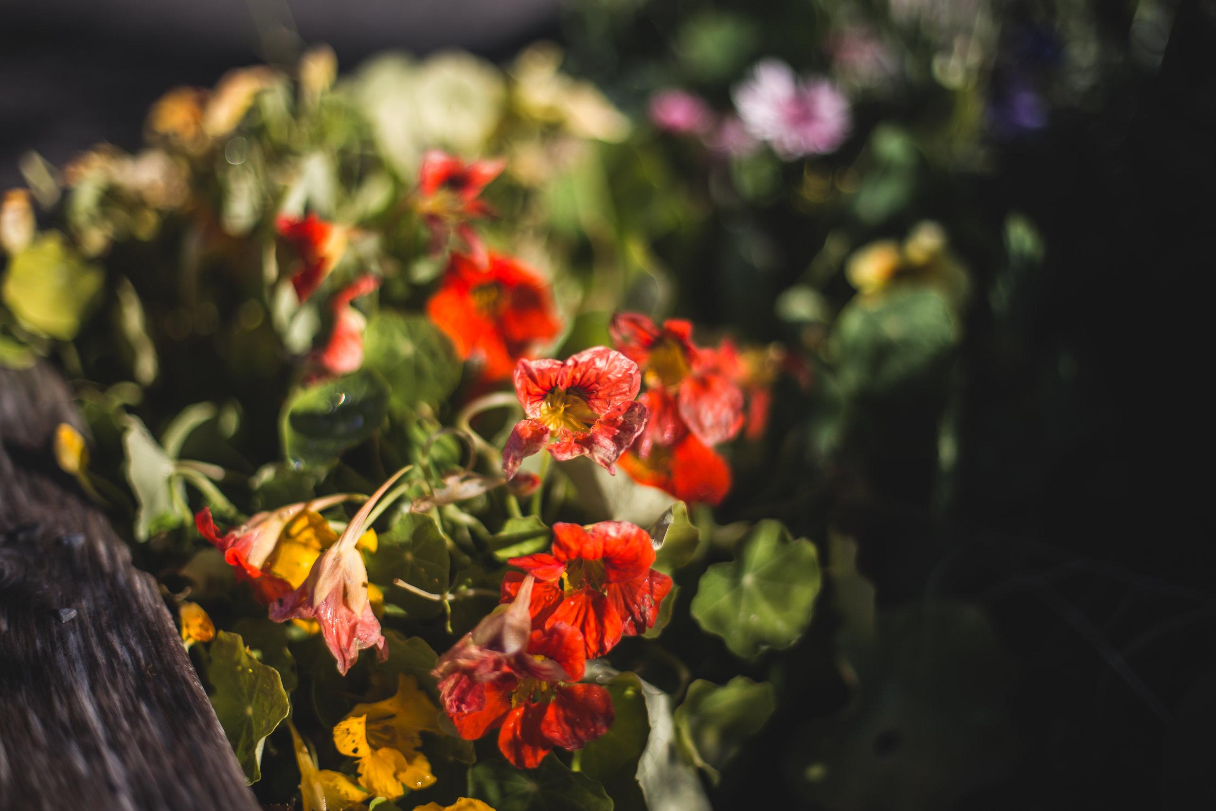 flowersandplants-9.jpg