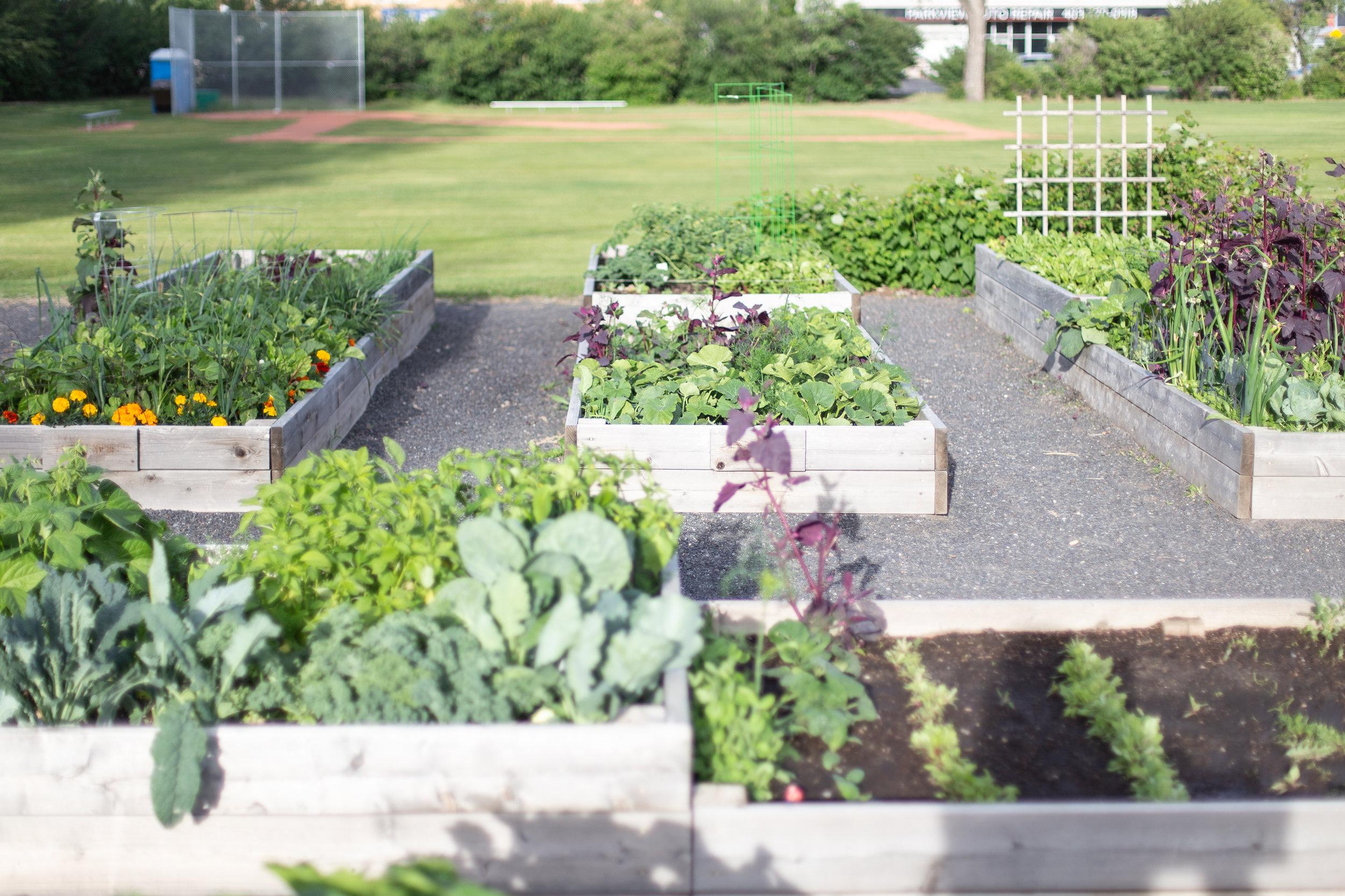 PlantsandFlowers-17.jpg