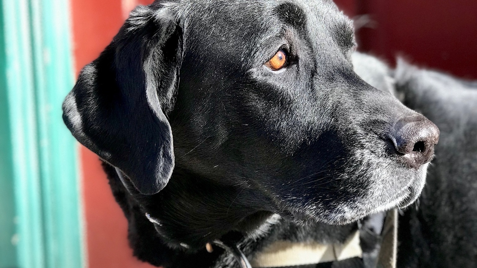 Wag the Dog - Dog Walking and Pet Pals in Philadelphia