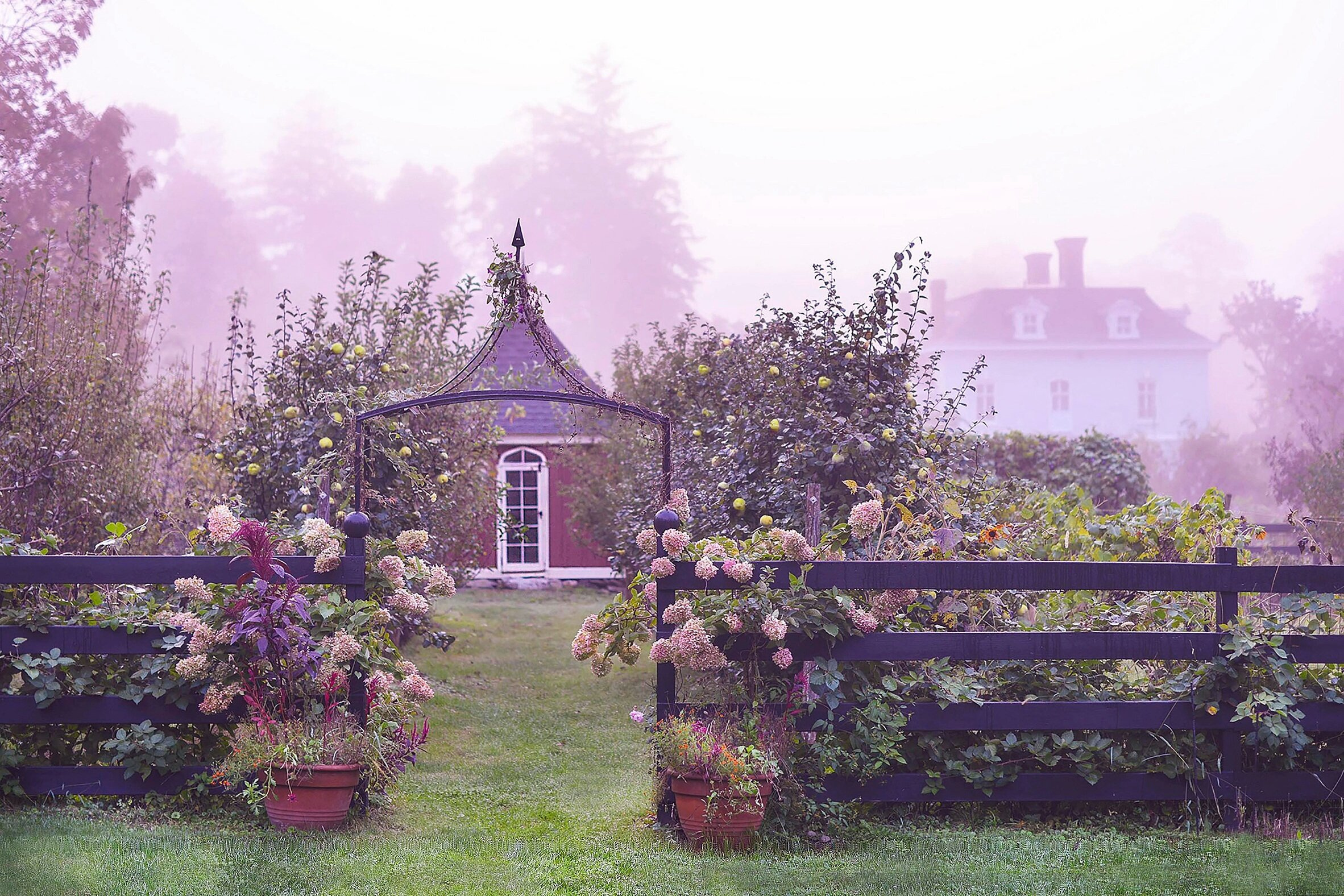 Cultivating Beauty… - at Stonegate Farm