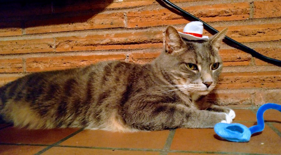 just a cat and his hat