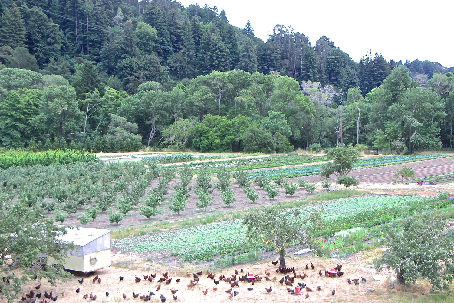 Rich and Laura's farm is right up the Soquel Valley and has a farm stand full of fresh produce.