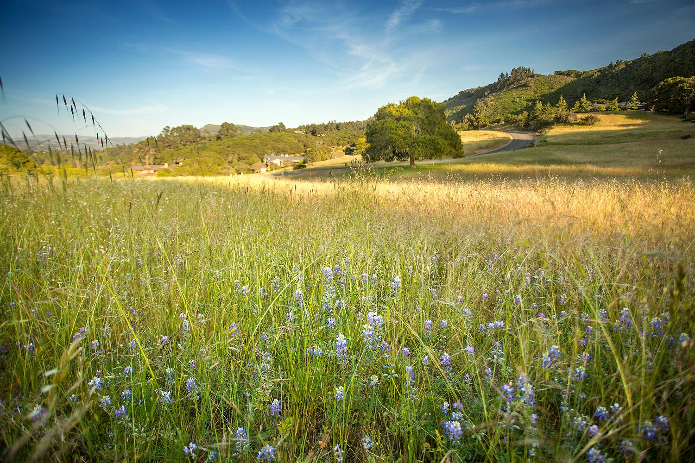 Quail Meadows 12.jpg