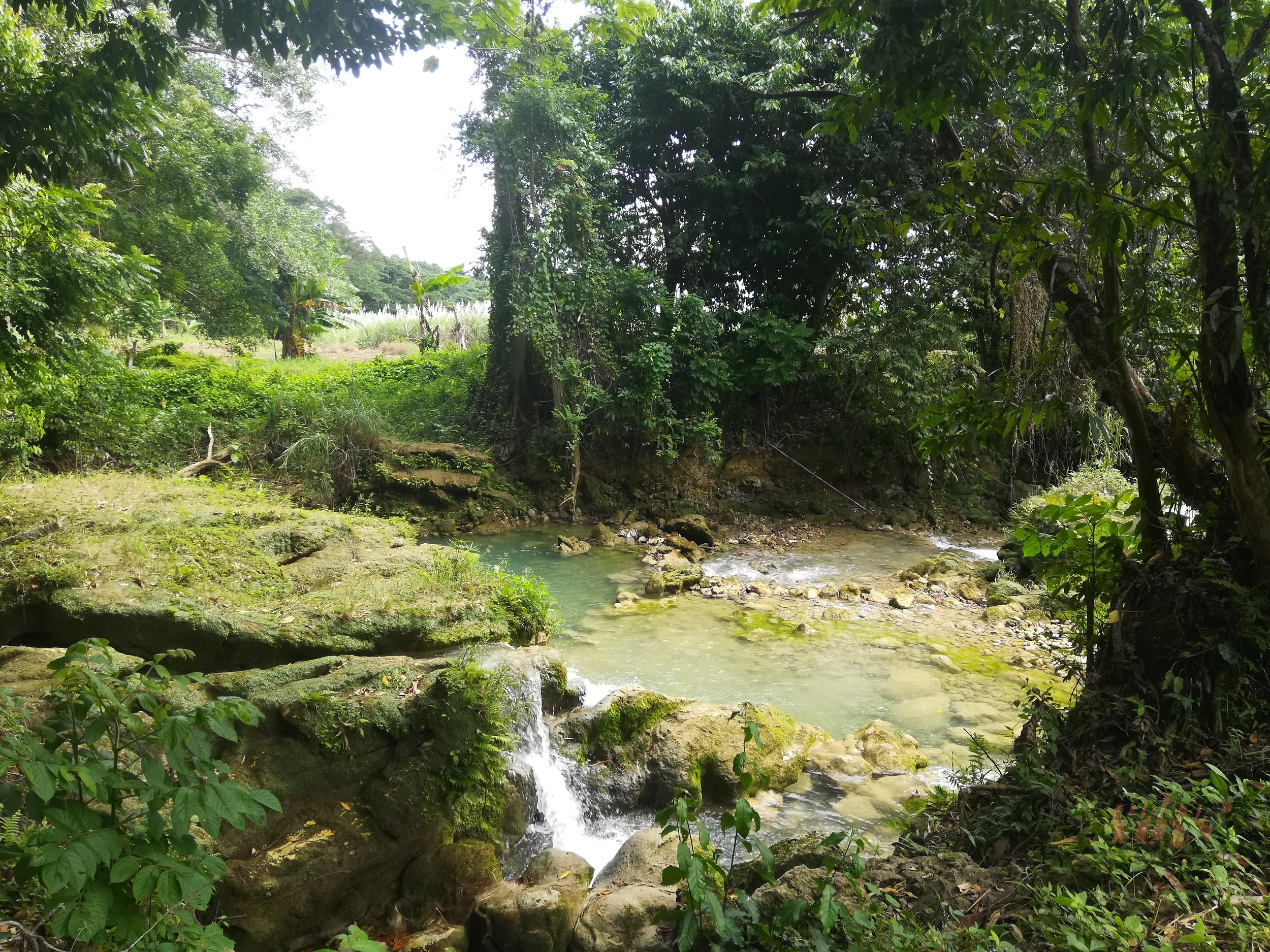 Maggotty Falls Jamaica.jpg