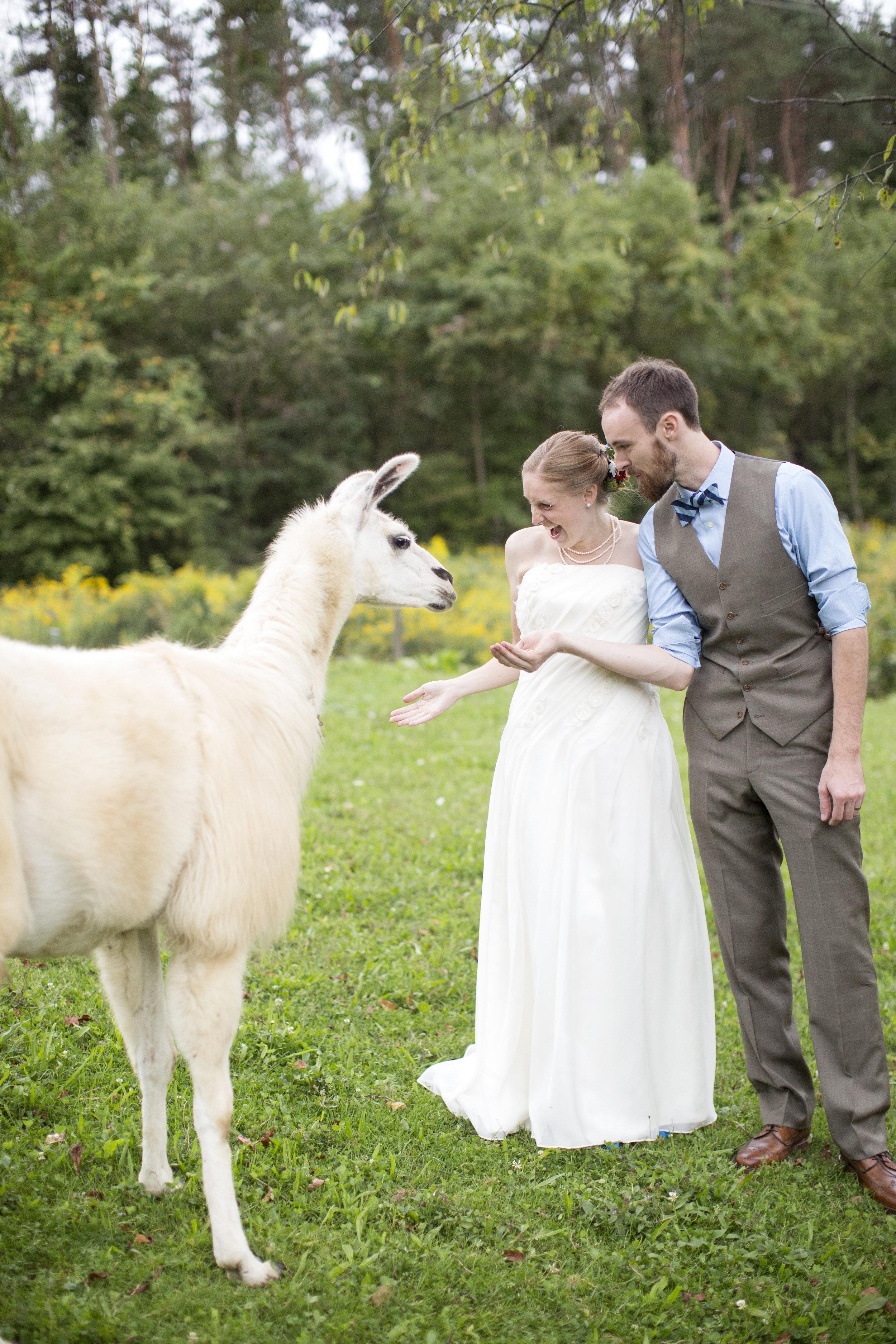 A Quirky Alpaca Farm Wedding