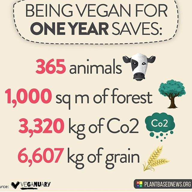 Consider a plant based lifestyle to save the world and feel great doing it ♻️🌍♥️ #allinthesameboat  #vegan #vegansavestheworld