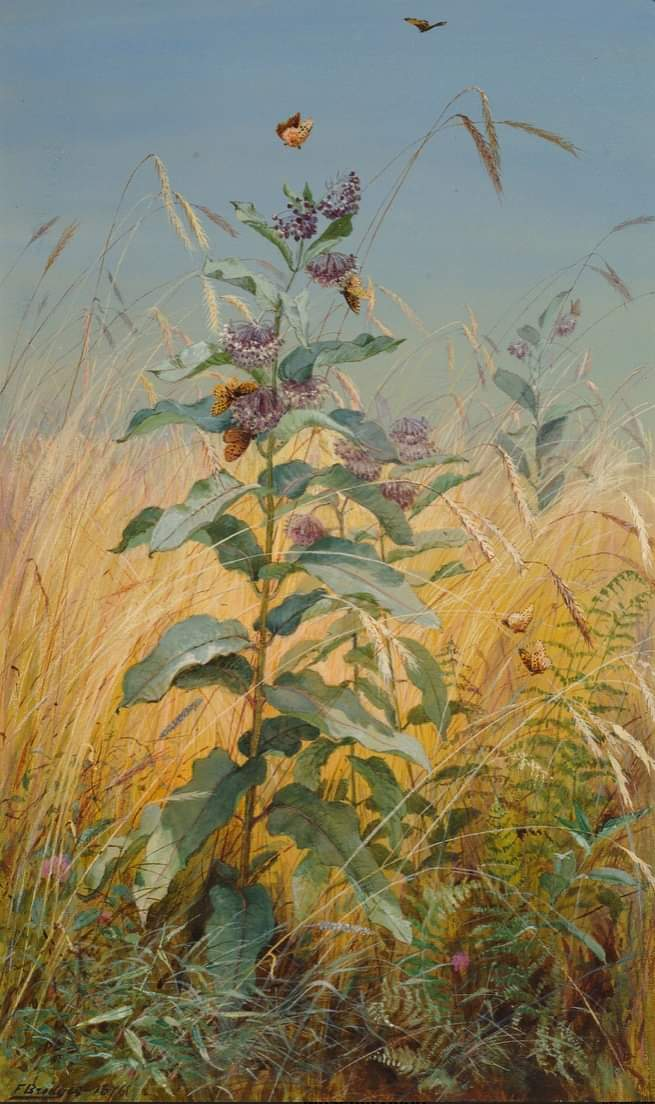 Milkweeds,  1876, watercolor by   Fidelia Bridges (American, 1834-1923).