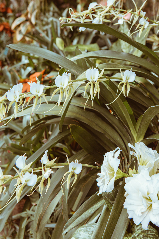 Mangroves_travel-1C8A0105.jpg