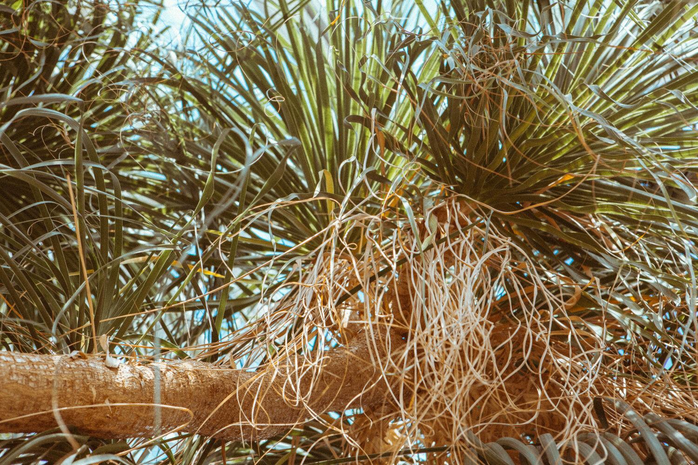 Mangroves_travel-1C8A0186.jpg
