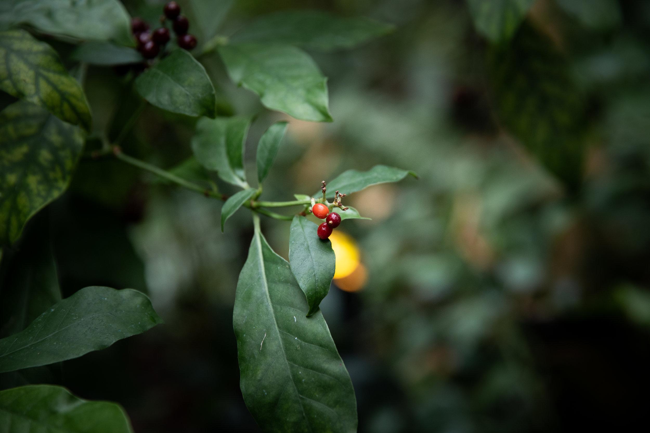 Botanical-Gardens-TT018.jpg