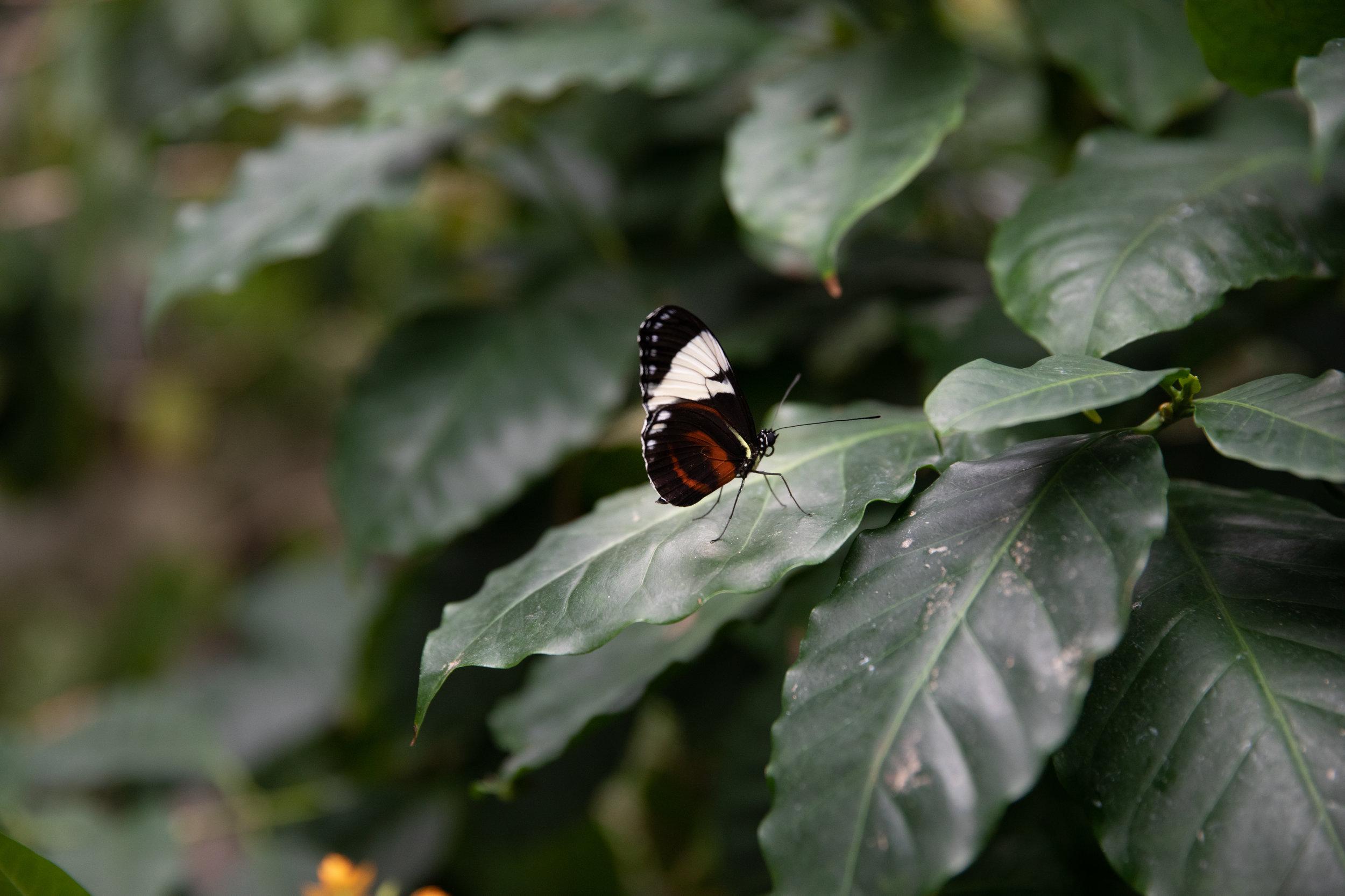 Botanical-Gardens-TT014.jpg
