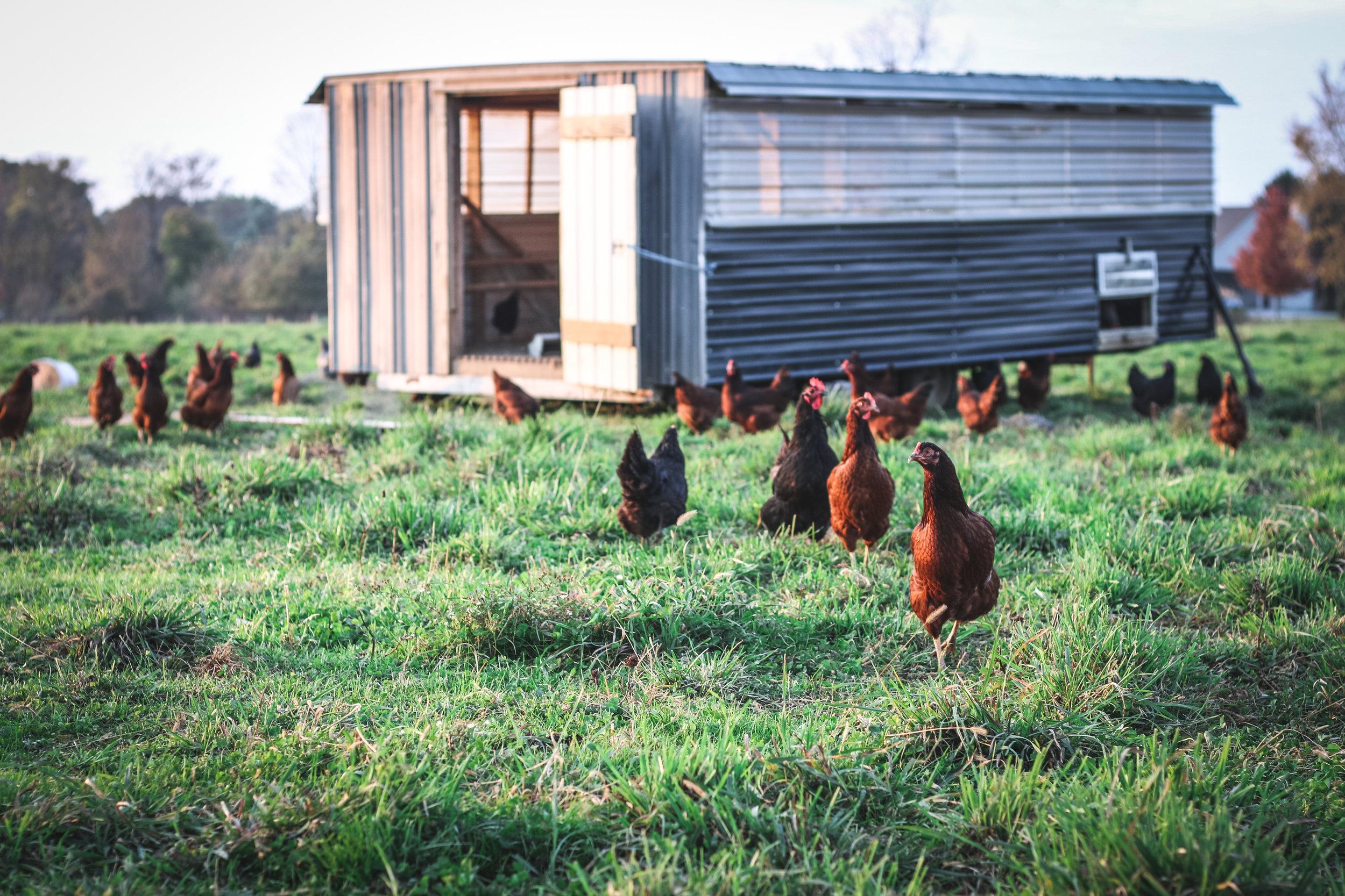 Freedom Acres Farm - 1043 Compass Road, Honeybrook, PA 19344sam.freedomacres@gmail.com610-451-8417