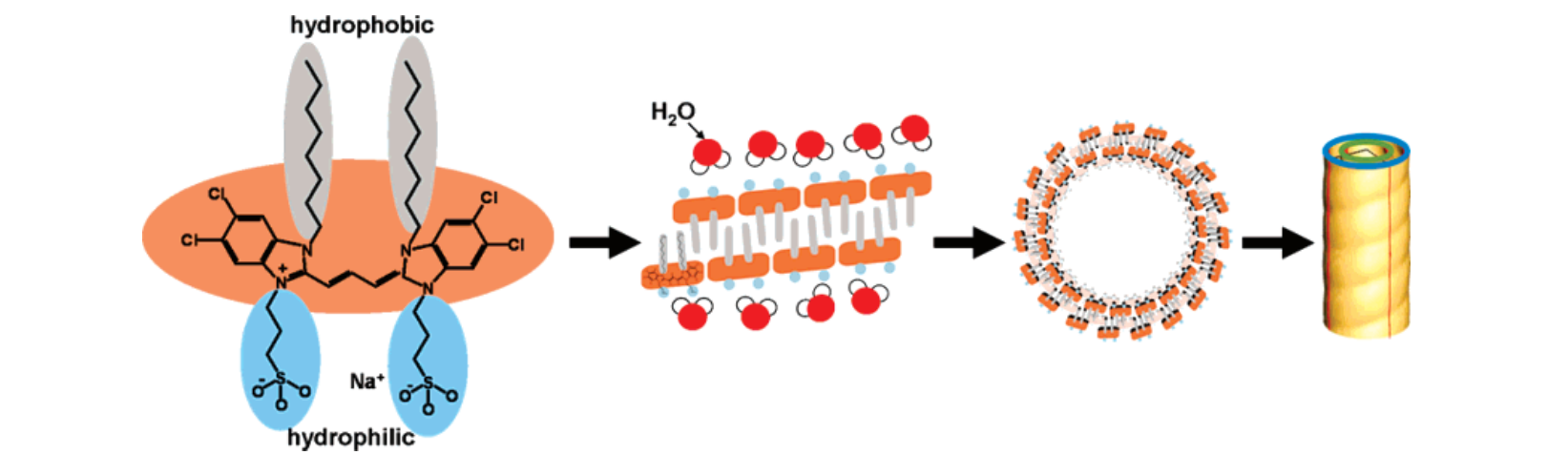 SCHEME 1: (Left to Right) Chemical Structure of C8S3 Cyanine Dye, Showing the Most Hydrophilic and Hydrophobic Regions; Simple Sketch of Bilayer Formation (Not Scaled); Top View of Double-Walled Tubule Formed by the Bilayer (Not Scaled, Simplified); Three-Dimensional Image of Helical, Double-Walled Tubule