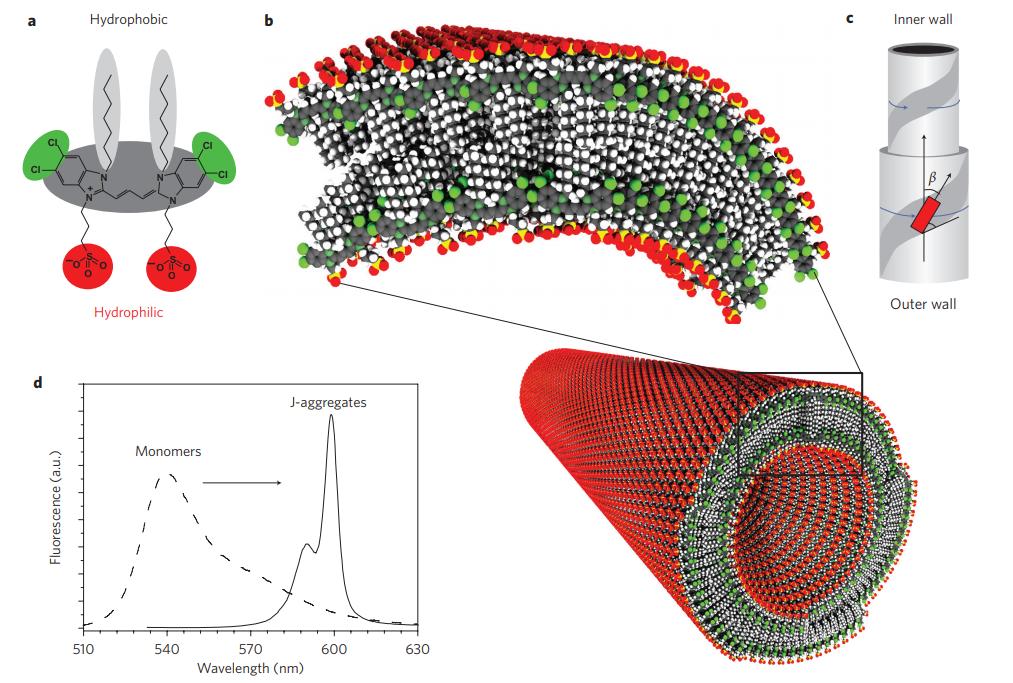 Cylindrical chiral double-walled nanotubular J-aggregates of an amphiphilic cyanine dye molecule