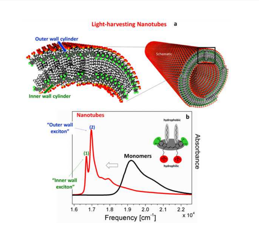 The excitonic system under consideration: Lightharvesting nanotube consisting of a double-walled cylindrical aggregate of amphiphilic cyanine dye molecules.