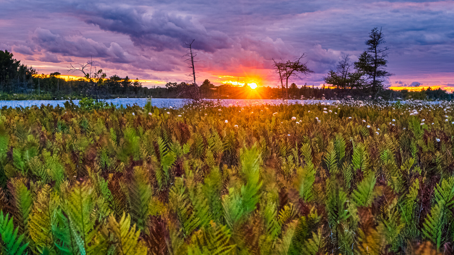 Torrance Barrens Ferns and Clouds