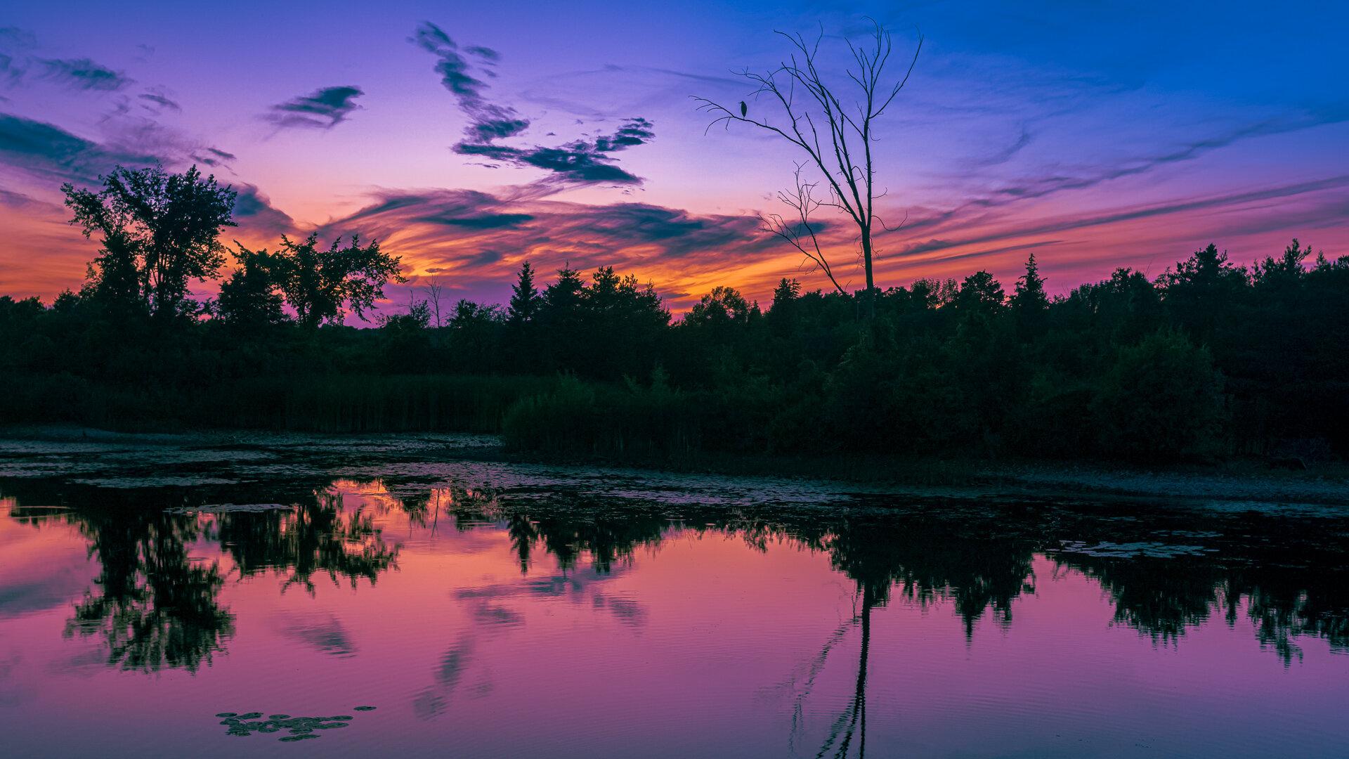 Great Blue Heron Orangeville Marsh Sunset