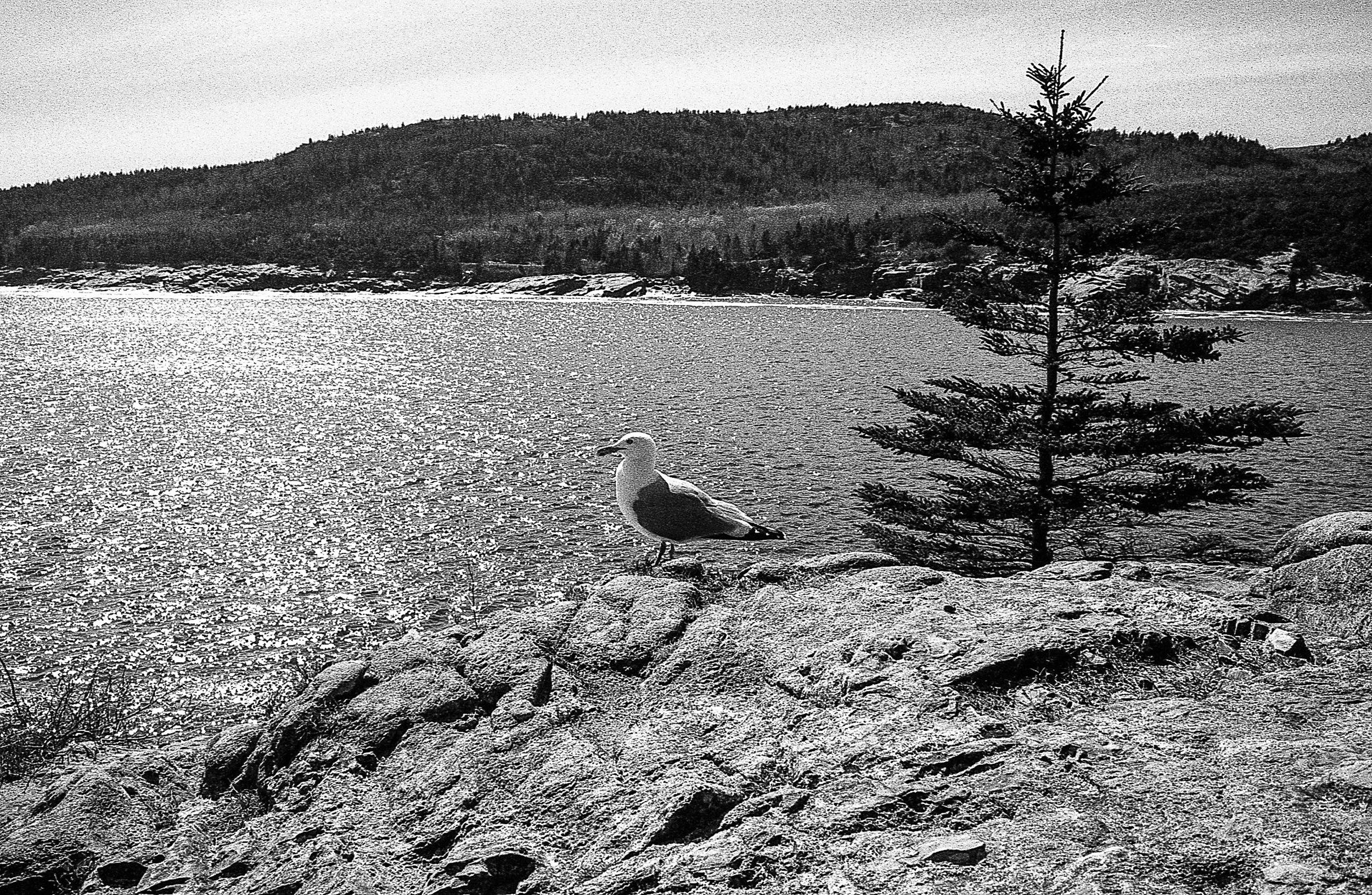 Maine007.jpg