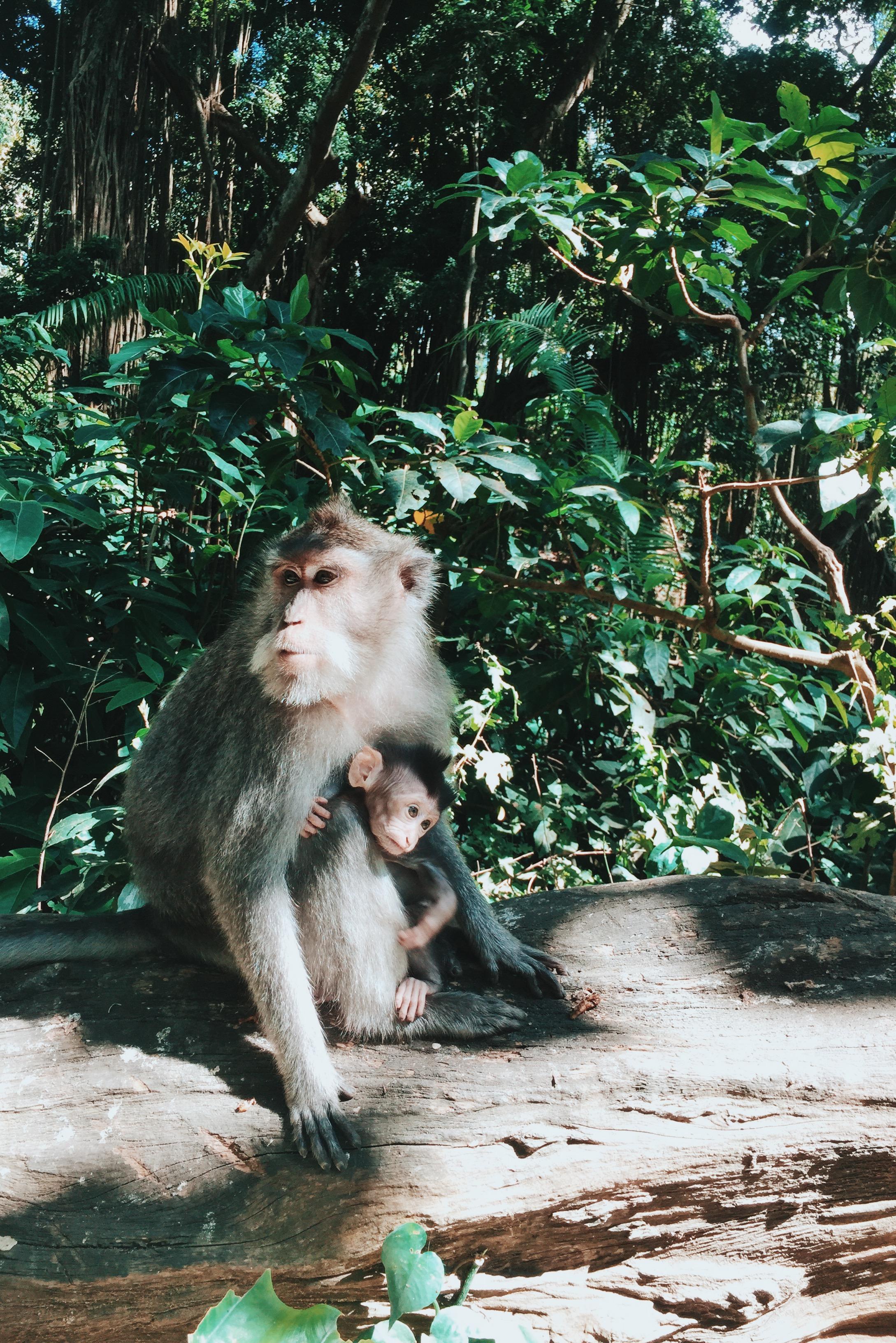Sacred Monkey Forest,  Jl. Monkey Forest, Ubud, Kabupaten Gianyar, Bali 80571, Indonesia