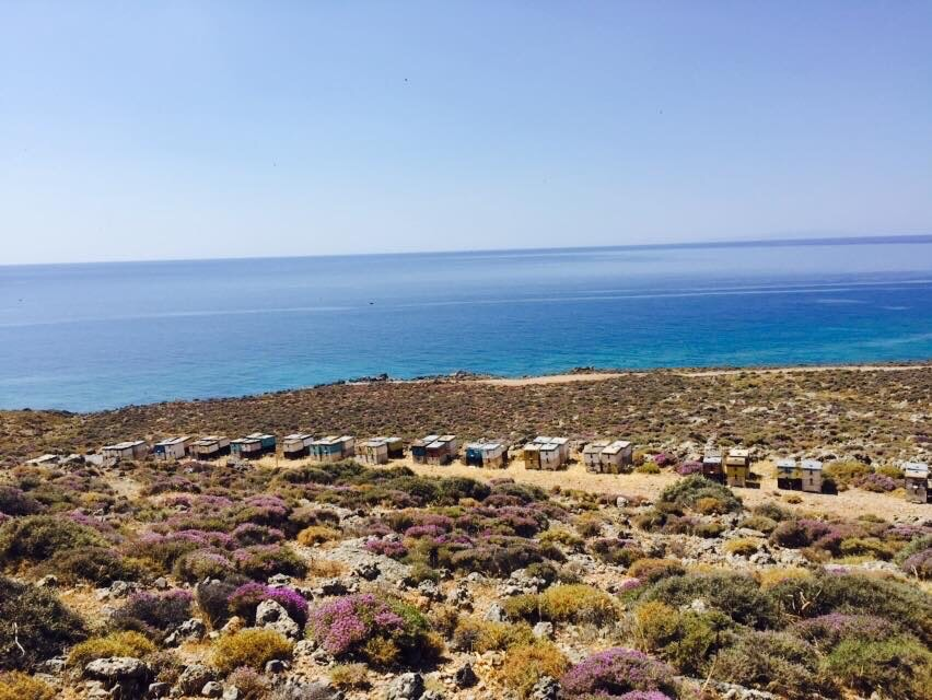 Where this honey is harvested from, Sfakia on Crete.