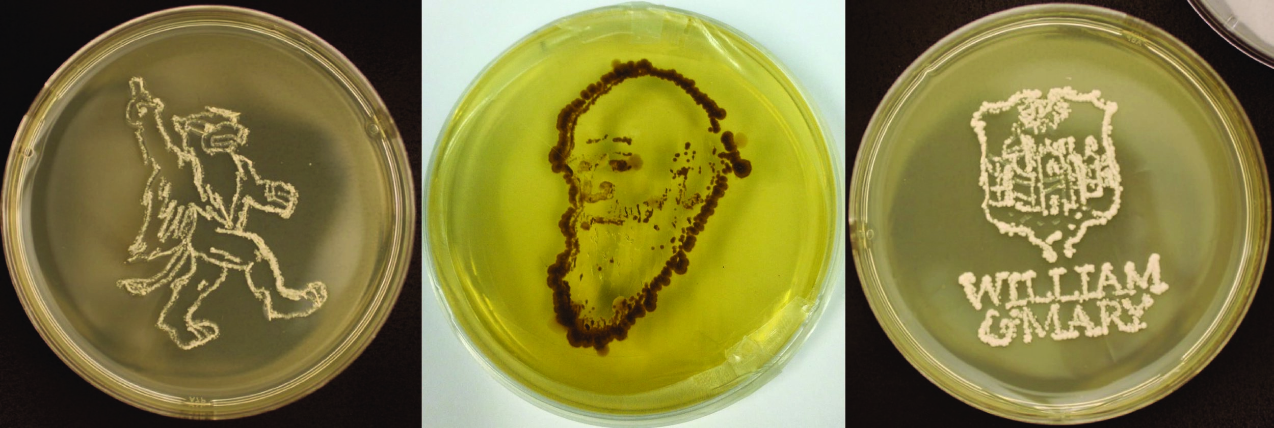 Yeast art by  Luke Reding