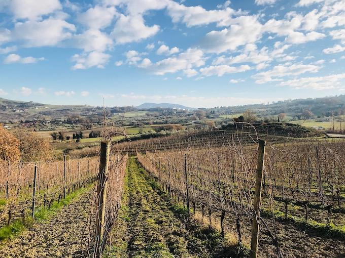San Marino wineries and vineyards.jpg