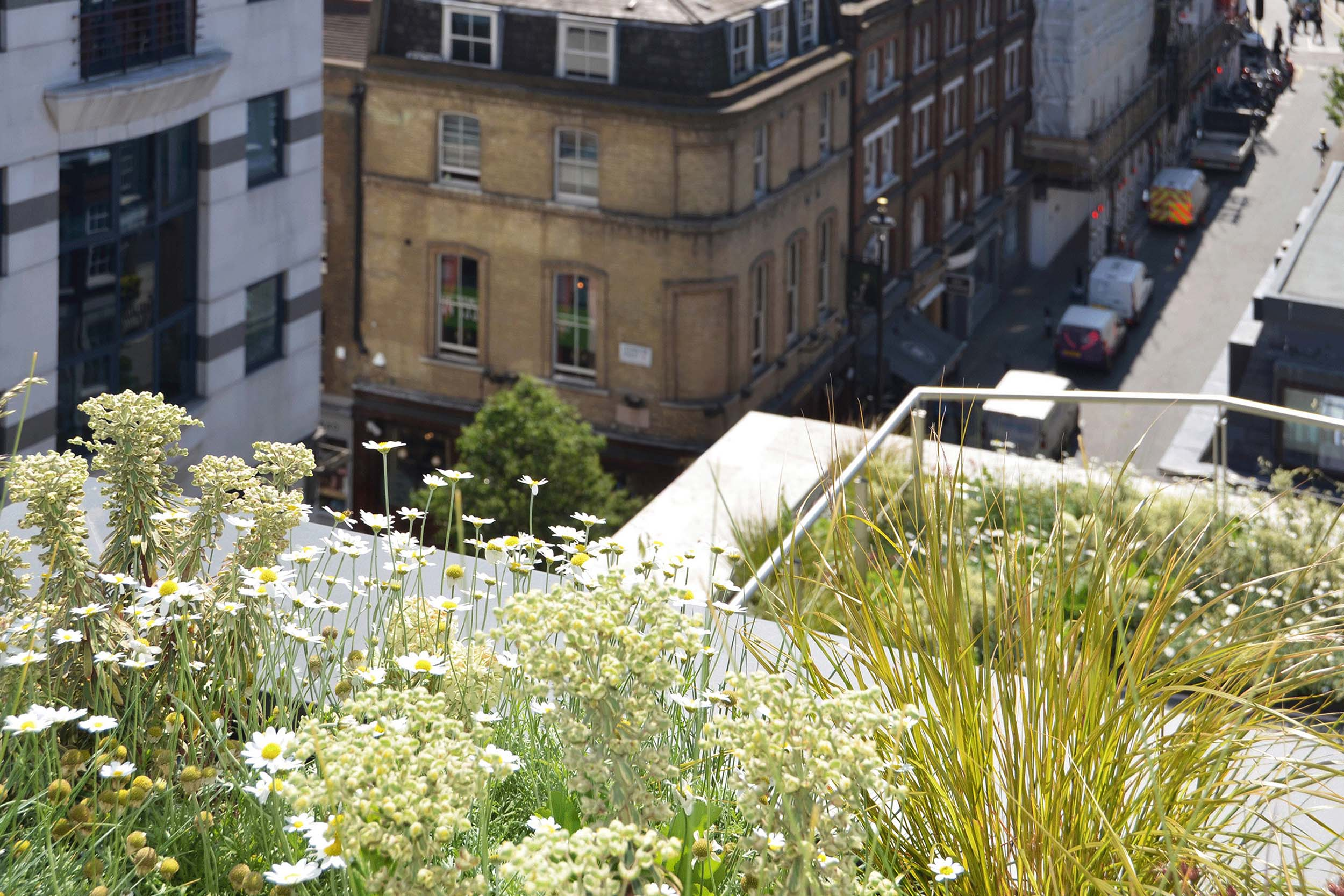 View to Soho from planted roof terraces.