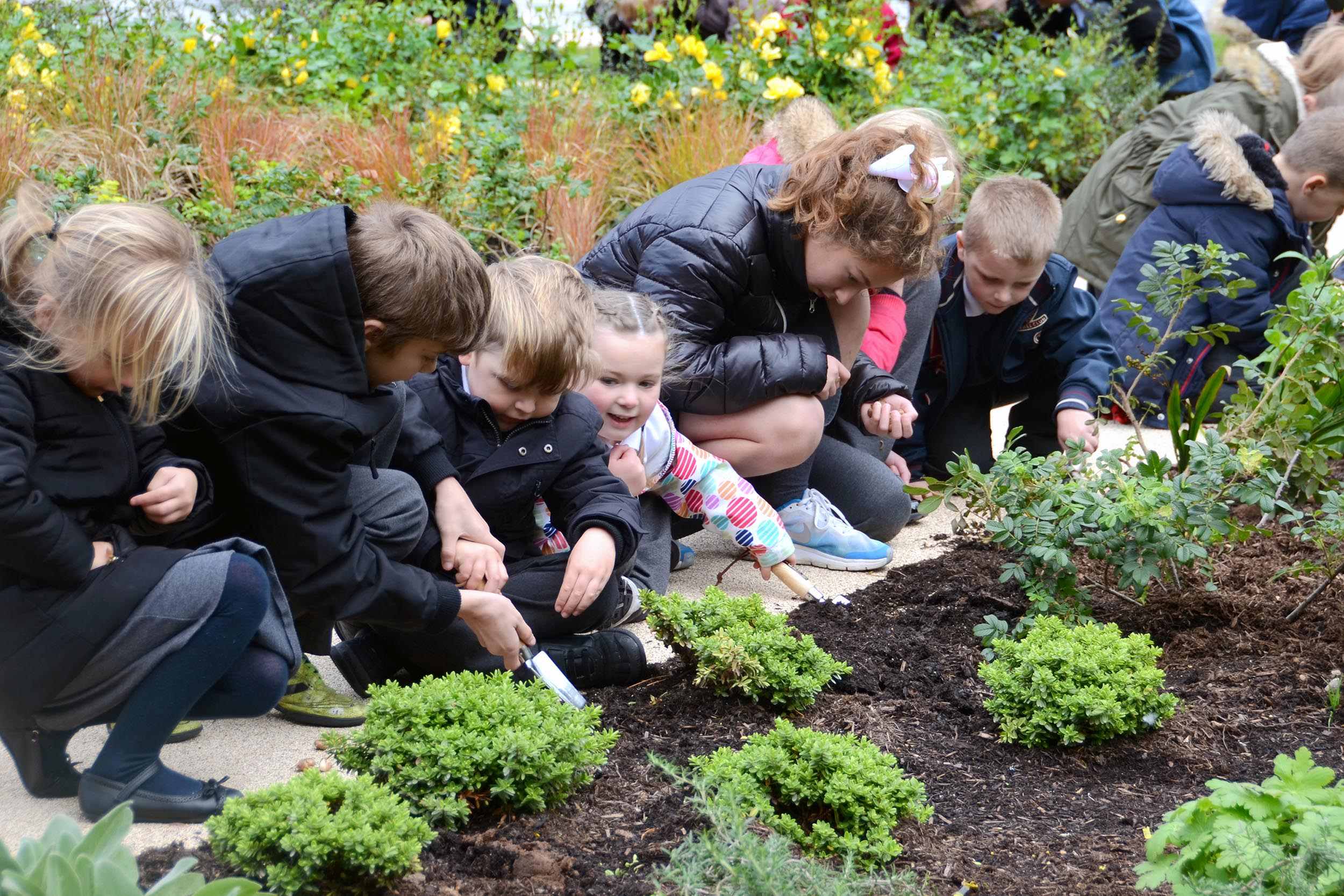 Local school carrying out planting.