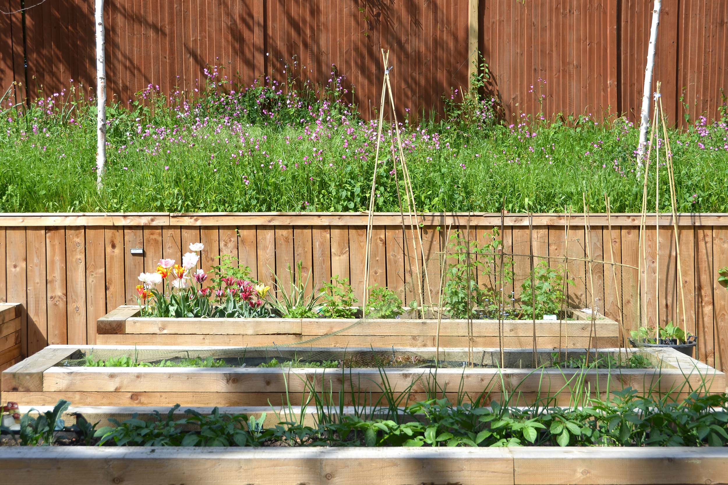 Community allotments at Woodside Square with raised beds for accessibility.