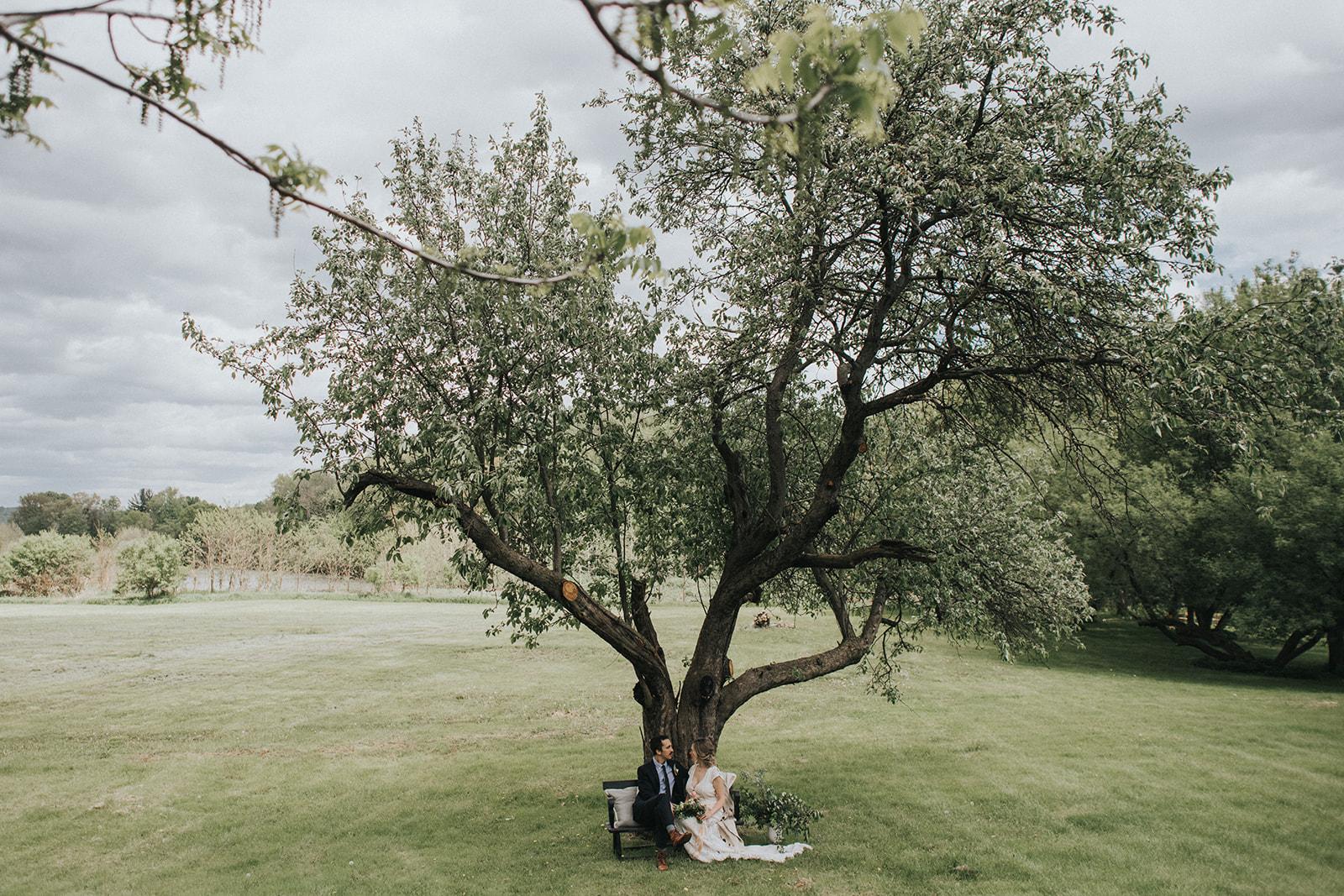 The Maples Estate_Property_Apple Tree.jpg