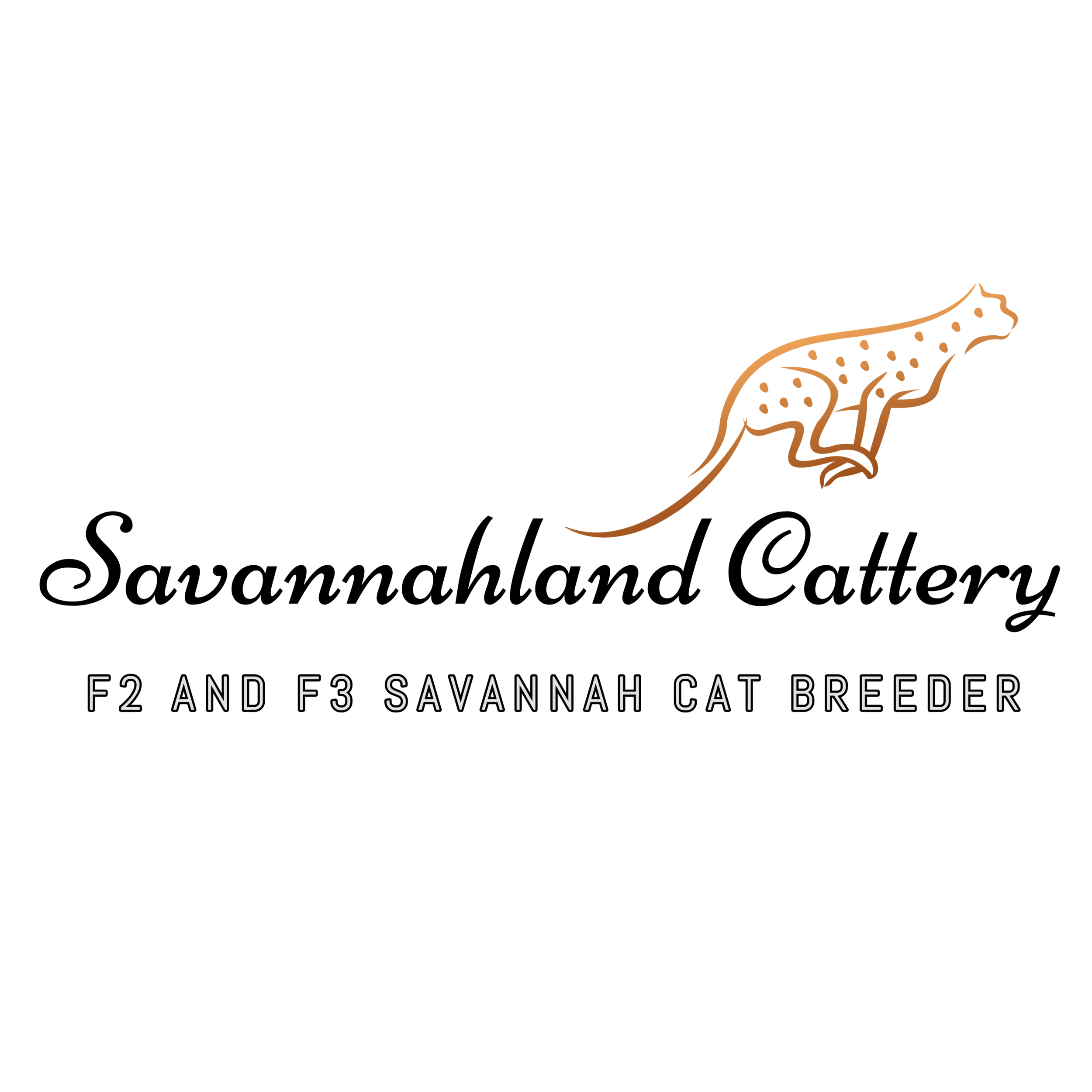 - Because a Savannah cat will change your life ….Be ready to fall in Love
