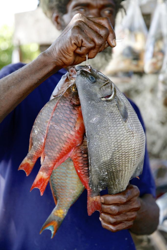 Jamaica-fish-1-683x1024.jpg