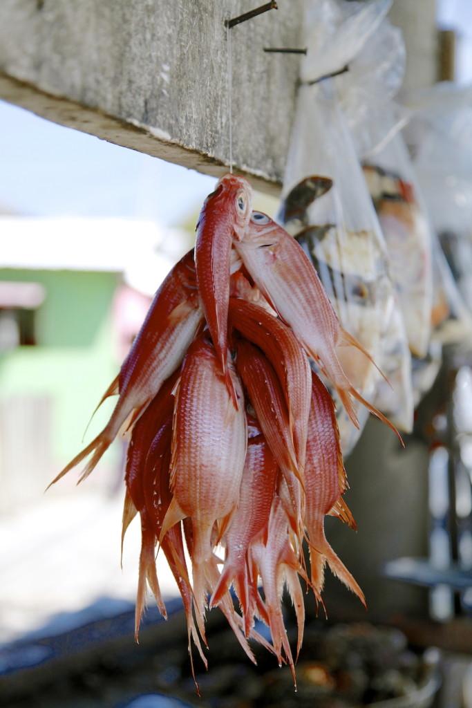 Jamaica-fish-683x1024.jpg
