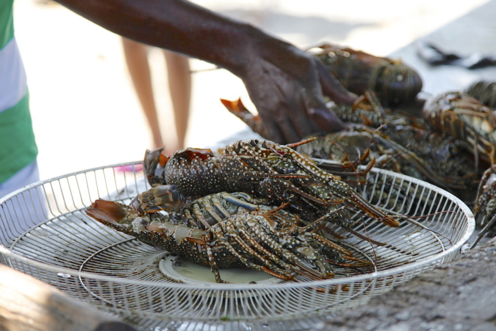 Jamaica-lobster-1024x683.jpg