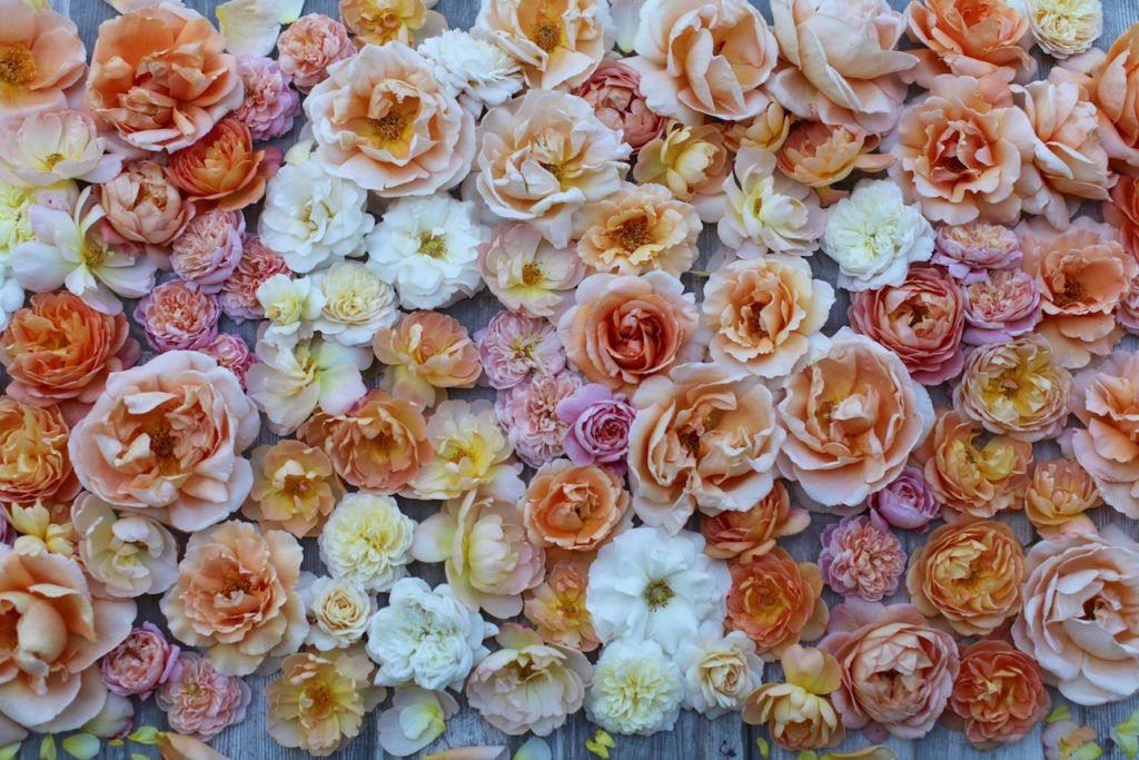 Floret5-1024x683.jpg