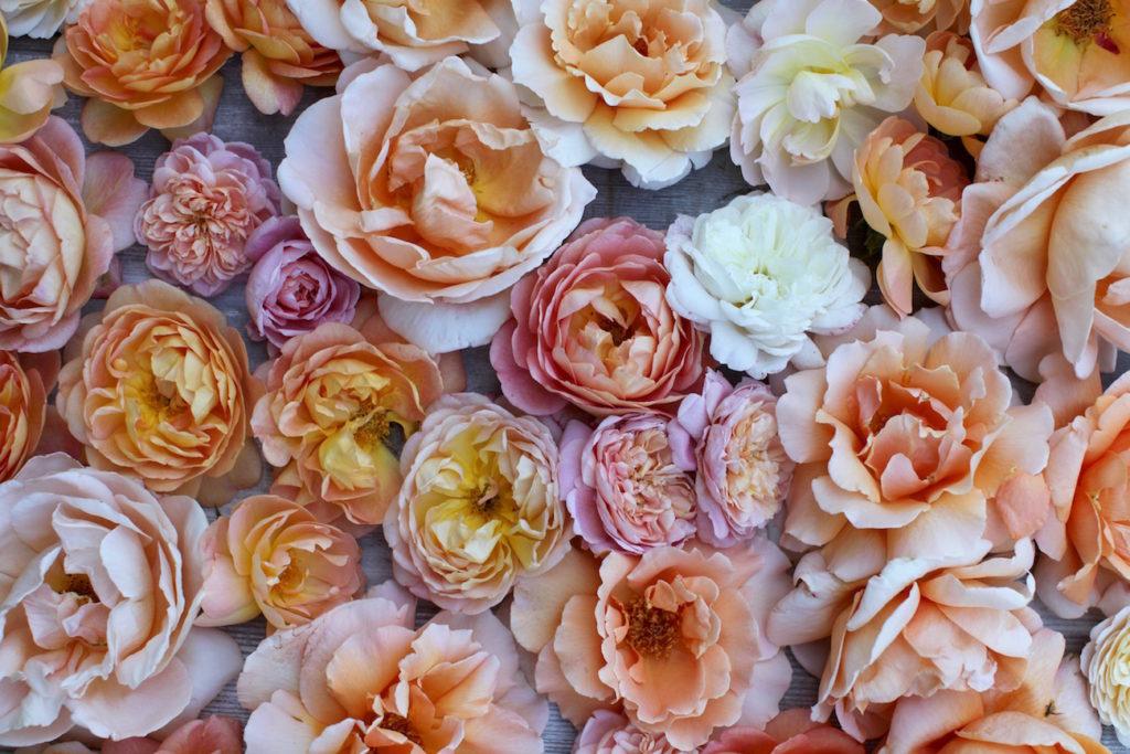 Floret6-1024x683.jpg
