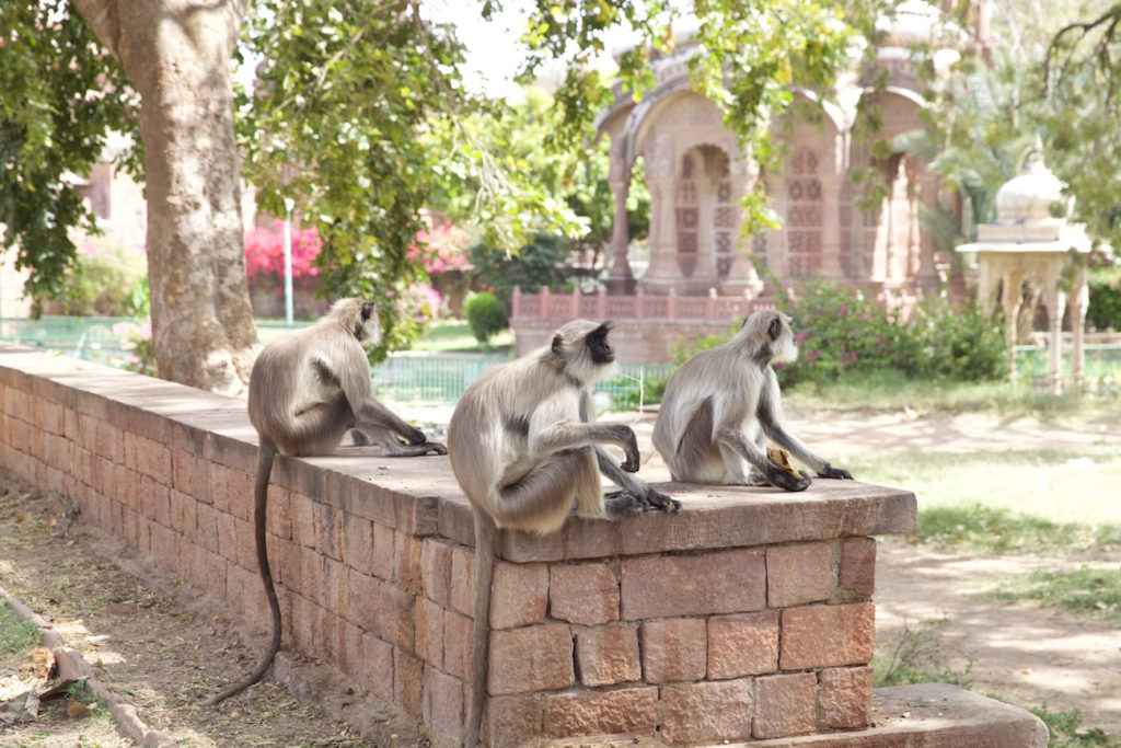 c.chitnis-India_6196-1024x683.jpg
