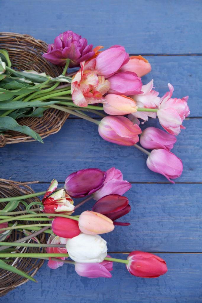 c.chitnis-wicked-tulip_8036-683x1024.jpg