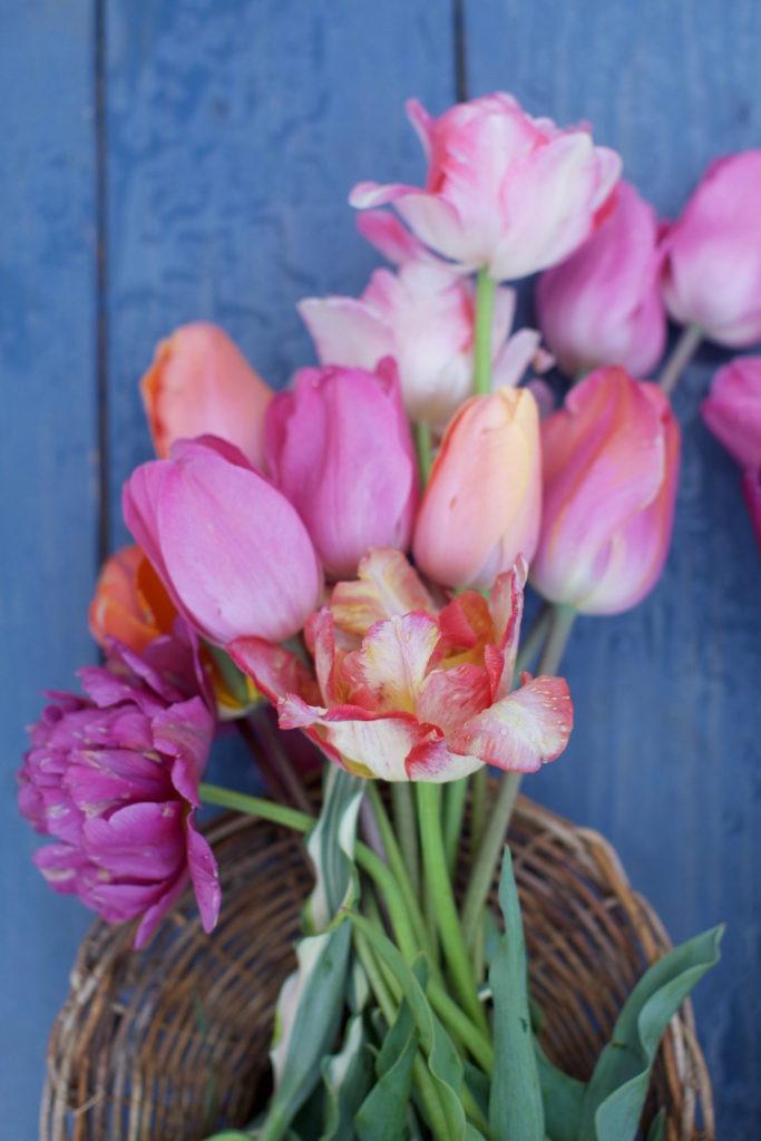 c.chitnis-wicked-tulip_8062-683x1024.jpg