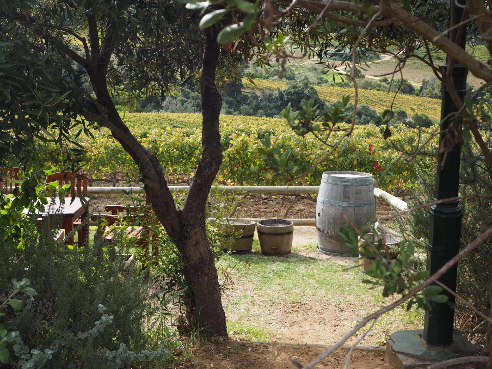 Idyllic spot for afternoon wine.