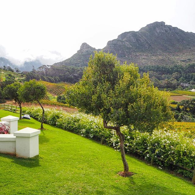 Cape Town has so much to offer, and such a variety of things to see and do even with limited time 😎 did you know you can escape to serene vineyards for a tasting in