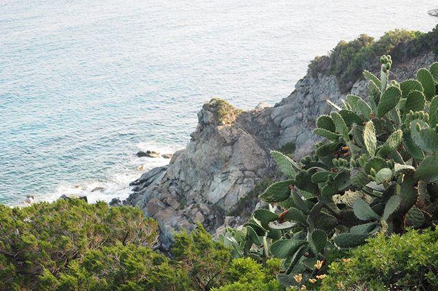 Castiadas in Sardinia last summer 🇮🇹🌵 (new post on the blog✨) . . #italy #sardinia #sardegna #italia #castiadas #ladolcevita #mondolöytö #matkablogi #matkabloggaaja #bloggaaja #reseblogg #resebloggare #traveblogger